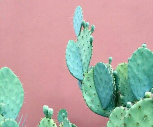 cactus, wallpaper, and pink image