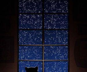 cat, stars, and night image