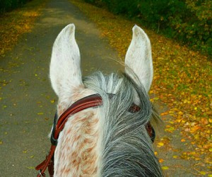 fall, horse, and love of my life image