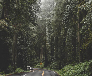 forest, indie, and mountain image