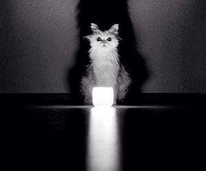 black, candle, and black and white image