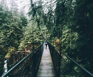 adventure, forest, and nature image