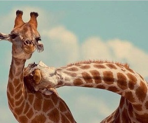 giraffe, animal, and friends image