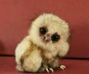 cute, owl, and animal image