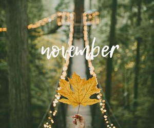 november, autumn, and forest image