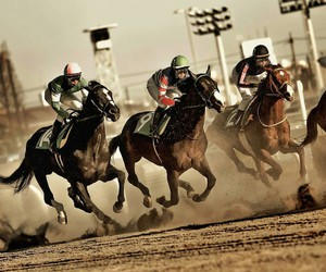 horse, photography, and racing image