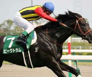 equine, horse, and racing image