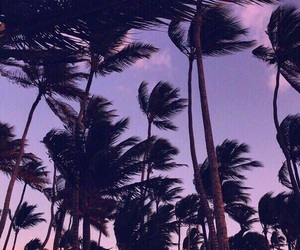 palms and summer image