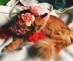 cat and flower image