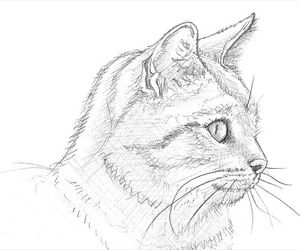 cat, draw, and illustration image