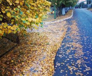 amazing, winter, and autumn image