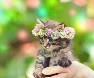 hippie- cute- kitten image