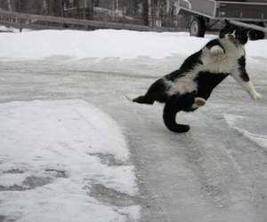cat, ice, and snow image