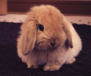 animals, bunny, and pet image