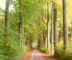 autumn, fall, and forest image