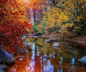 autumn, fall, and green image