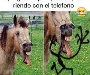 caballo, funny, and HAHAHA image