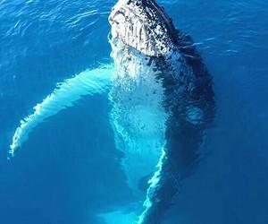 blue, whale, and sea image