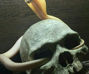 head, pet, and snake image