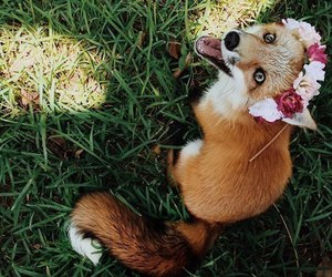 fox, animal, and flowers image
