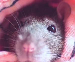 animals, cute animals, and fur image