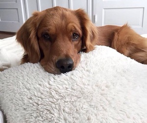animals, nice, and puppy image