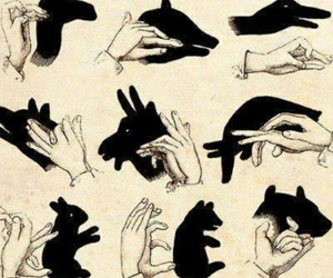 hands, shadow, and animal image