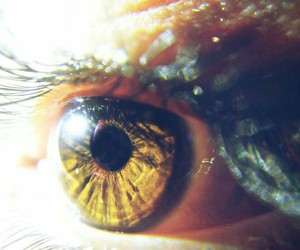 brown eyes, eyes, and photography image