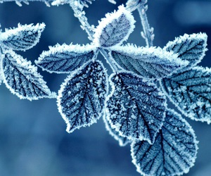 frozen, snow, and winter image
