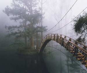 bridge, nature, and grunge image