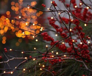 light, autumn, and christmas image