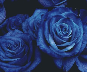 flowers, blue roses, and roses image