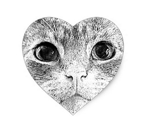 cats, pets, and stickers image