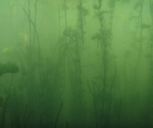 green, underwater, and water image
