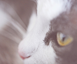 cat, nose, and ylvase image