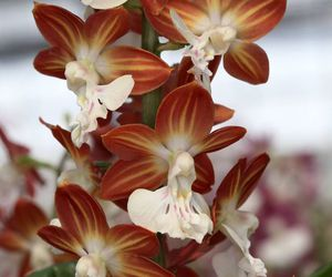 orchids image