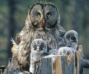 babies, baby, and owl image