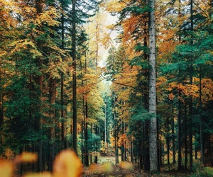 autumn, hipster, and fall image