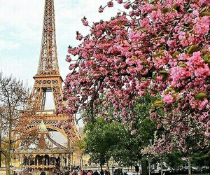 flowers, pink, and france image