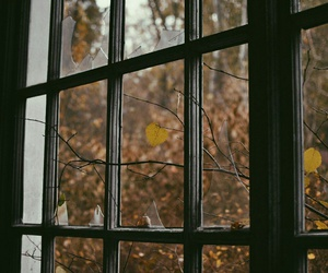 DIA, folhas, and outono image