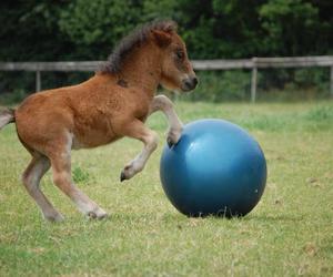 ball, caballo, and horse image