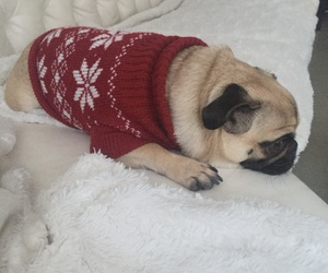 H&M, mops, and pullover image