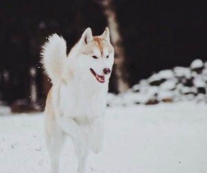 animal, dog, and winter image