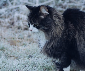 cat, frost, and ice image