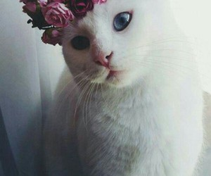 cat, flowers, and white image
