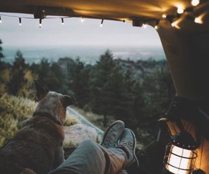 dog, nature, and travel image