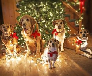 christmas, dogs, and Christmas time image