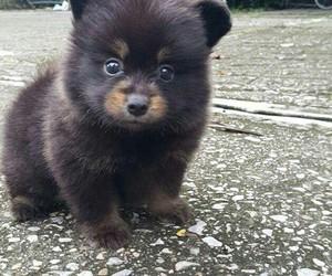 animal, cute, and dog image