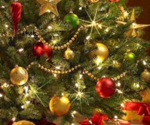 winter and christmas tree image