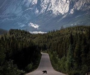 bear, nature, and forest image